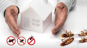 Pest Control Management: Frequently Asked Questions